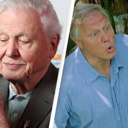 Sir David Attenborough's Greatest Moments Celebrated On His 95th Birthday