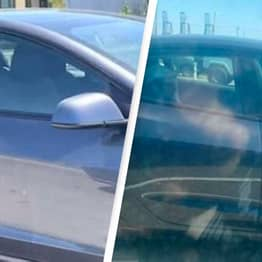 Police Hunting Man Seen Riding In Backseat Of Tesla With No Driver