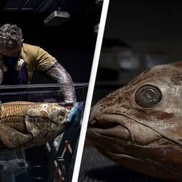 'Extinct' Fossil Fish Thought To Have Lived 420 Million Year Ago Found Alive