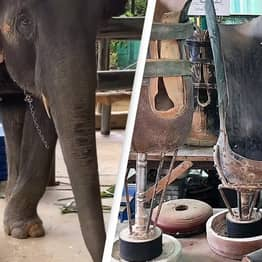 'Jungle Doctor' Celebrated For Fitting Prosthetic Legs To Elephants Injured By Landmines