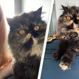 Woman Saves Over $22,000 By Looking After Cats While Travelling The World