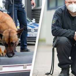 Police Sniffer Dogs Are Taking Early Retirement Because Of Marijuana Legalisation