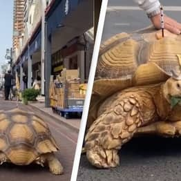 Old Man Takes His Beloved Giant African Tortoise On Walk Every Day