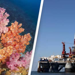 BP To Drill For Gas On The Edge Of World's Largest Cold-Water Coral Reef