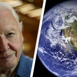 David Attenborough Brands Climate Crisis A 'Crime' That Humans Have Committed