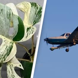 This Houseplant Is More Expensive Than A Small Plane