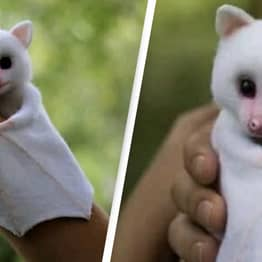 Cute Baby Albino Bat Being Shared Online Is Actually A Toy
