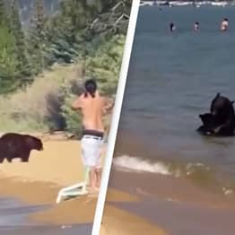 Shocking Video Shows Mother Bear And 3 Cubs Splash In Lake Among Other Swimmers