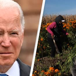 Biden's $4 Billion Project To Help Black Farmers Blocked By Judge As 'Unconstitutional'