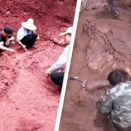 Huge Nearly Intact Dinosaur Discovered In China