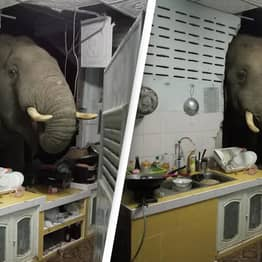 Hungry Elephant Smashes Through Kitchen Wall Looking For Something To Eat
