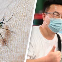 China Has Officially Been Declared Free Of Malaria