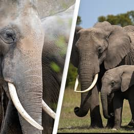 13 Elephants From Animal Park Will Travel To Africa In World-First Rewilding Project