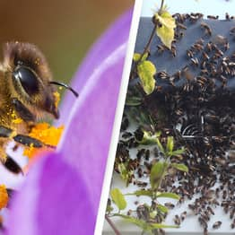 Man Killed In Bee Swarm After Being Stung Hundreds Of Times