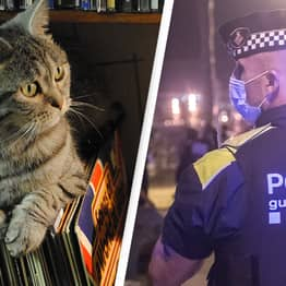Noise Complaint Leads Police To Find Cat Home Alone Blasting Music