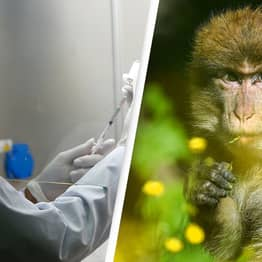 Researcher Dies After Contracting Rare 'Monkey B' Virus