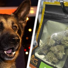 Legalisation Of Marijuana Is Forcing Police Dogs To Retire