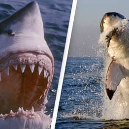 People Told To Rename Shark Attacks As 'Interactions'