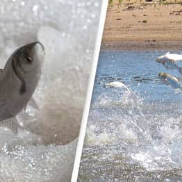 'Asian Carp' Could Be Renamed Over Racism Concerns