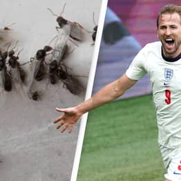 Millions Of Flying Ants Detected On Radar Could Swarm Wembley During Euro Final