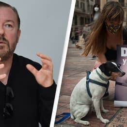 Ricky Gervais Launches Campaign To Ban All Animal Experiments