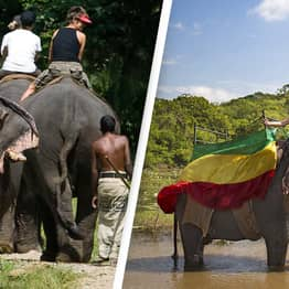 'Drunk Driving' On Elephants Banned In New Protection Laws