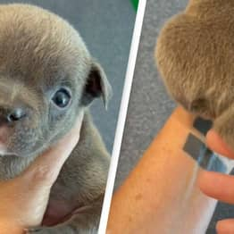 Incredible Puppy With Five Legs Is Baffling The Internet
