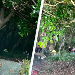Hero Cat's 'Persistent' Meows Lead To Rescue Of 83-Year-Old Owner Stuck Down Ravine