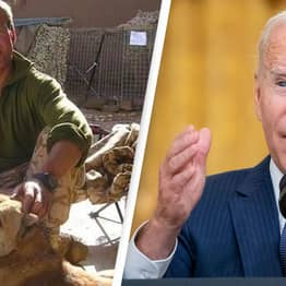 Afghanistan: Former Royal Marine Blames Biden For Failure To Rescue 200 Cats And Dogs