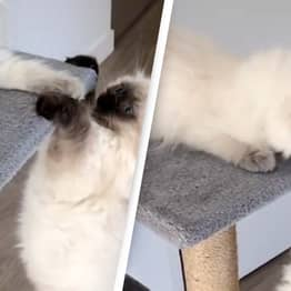 Two Cats Just Recreated That Lion King Scene And It's Incredible