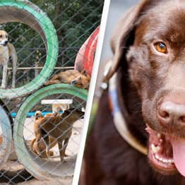 Outrage As Dogs Shot Dead Due To COVID Restrictions