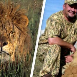 Activists Expose Trophy Hunter After He Paid $30K To Kill Lion