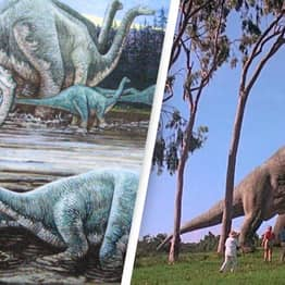 Two New Species Of Massive Sauropod Dinosaur Discovered In China
