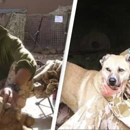 Afghanistan: Former Royal Marine Forced To Put Down Rescue Dogs As Taliban Closed In