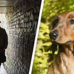 Dog Owners Warned About Thieves Stalking Parks And Luring Puppies Out Of Gardens