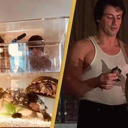 Sylvester Stallone Says He's Still In Contact With His Turtles From Rocky