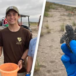 Park Patrol Finds Extremely Rare Two-Headed Sea Turtle