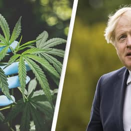 Refusing To Decriminalise Cannabis Aligns Government With Crime Gangs, Argues Advocate