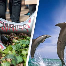 'Almost 1,500' Dolphins Brutally Slaughtered In Legal Hunting Tradition