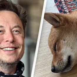 Elon Musk Names His Dog After An Obscure Cryptocurrency And Prices Immediately Surge
