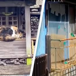 Footage Shows Unusual Things In Japan Including Cat Islands And Haunted Apartments