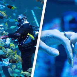 Scuba Diving Couple Have One Of UK's First Underwater Weddings