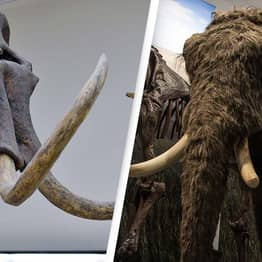 Woolly Mammoth To Be Brought Back From Extinction After Scientists Receive Funding