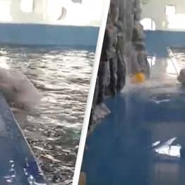 Incredible Whale Uses Hydro Blast To Retrieve Water Toy