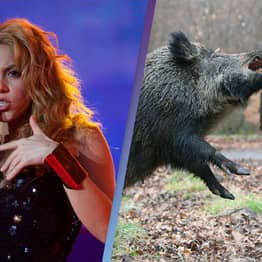 Shakira Says She Was Mugged By A 'Gang' Of Wild Boars