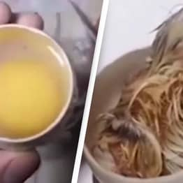 People Are Amazed And Horrified Over Video Of Chicken Growing In An Open Egg