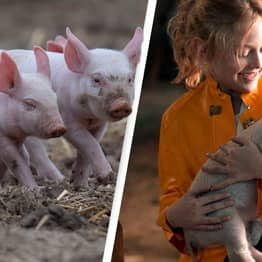 Woman Mistakenly Names Son After Famous Pig And Refuses To Change It