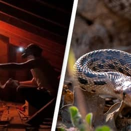 Man Fears Snakes Are Living In His Walls After Finding Terrifying Snake Skins