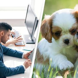 Debate Sparked Over Whether Employees Should Get 'Pawternity' Leave