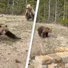Woman Who Took Close-Up Photos With Grizzly Bear Receives Jail Sentence